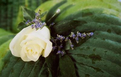 jg-best-mans-flower.jpg