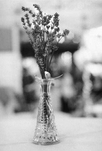 al-lavender.jpg