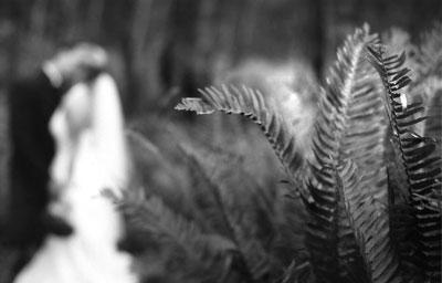 bw-ferns.jpg