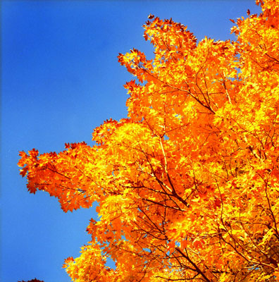 yellow-tree-blue-sky.jpg
