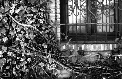 ivy-rot-iron.jpg
