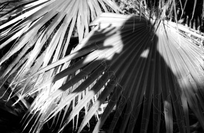 self-portrait-with-ferns.jpg